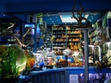 Our neighbourhood fitzrovia live aquatic design_kayandco_small